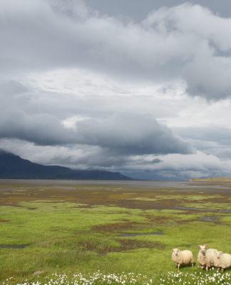 Nachhaltigkeit, alles grün? Nicht überall, so wie hier auf Island... (Foto: Jan Thomas Otte)